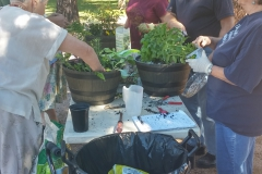 People placing plants in their pots.